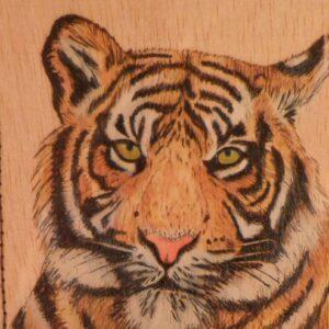 Imagen de un tigre pirograbado